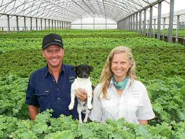 UNITED FARMERS: Graham and Fiona Grant, of Wardell Hydroponic Lettuce, have used their experiences in war zones to run a successful farming venture.