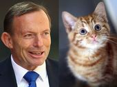 THE government used up more than 130 pages of correspondence talking about a viral web plug-in that replaces pictures of Tony Abbott with 'cute kittens'.