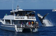 Hervey Bay whale watching.