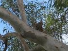TWEED Shire Council is joining with landholders to protect threatened flora and animals such as the koala, Albert's lyrebird and grey-headed flying fox.