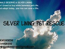 Silver Lining Pet Rescue at Glasshouse Market