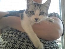 Lost much loved family kitten